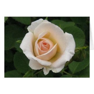 Aniversário-rosa Português-feliz Cartão Comemorativo
