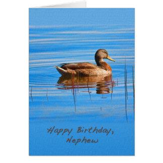 Aniversário, sobrinho, cartão do pato do pato