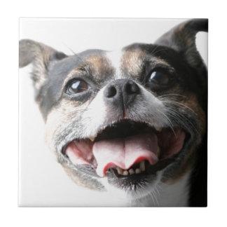 Anjo de um Doggy da vira-lata - raça misturada -