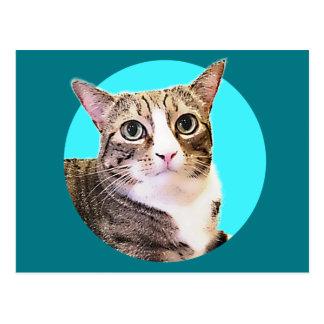 Anjo o gato cartão postal