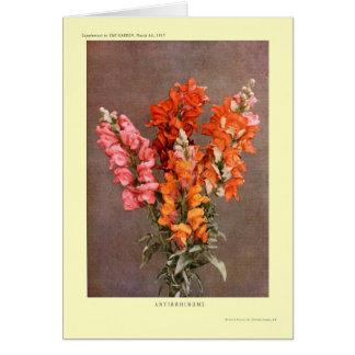Antirrhinums Cartão Comemorativo
