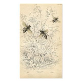 Anúncio do vintage, abelhas cartão de visita