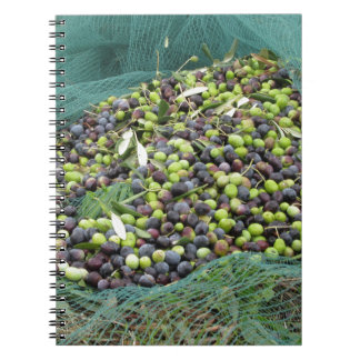 Apenas azeitonas escolhidas na rede durante o caderno espiral
