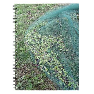 Apenas azeitonas escolhidas na rede durante o cadernos