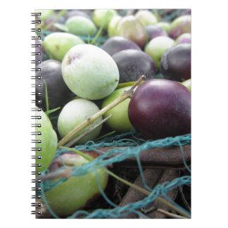 Apenas azeitonas escolhidas na rede durante o cadernos espiral