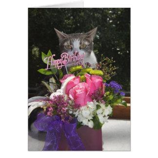 Apenas estalando no aniversário bonito do gato cartão comemorativo
