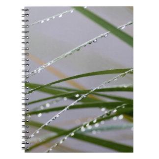Após o caderno da chuva