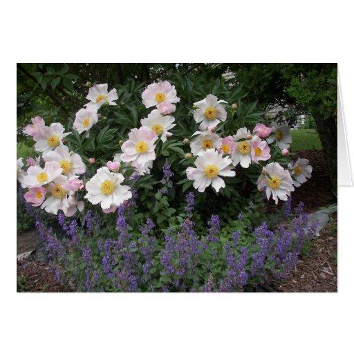 Aposentadoria - cronometre para cheirar as flores cartão