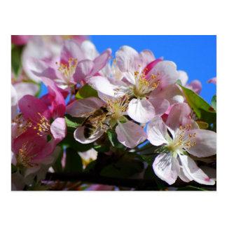 Apple florescem e o cartão da abelha do mel