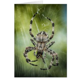 Aranha de queda bonita na Web Cartão