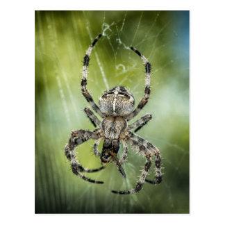 Aranha de queda bonita na Web Cartão Postal