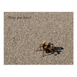 Aranha enorme II Cartão Postal