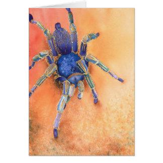 Aranha - Tarantula Cartão