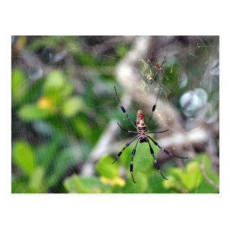Aranhas no cartão da Web