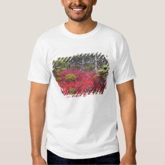 Arbustos e pinhos de mirtilo t-shirt