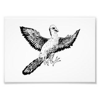 Archaeopteryx Impressão De Fotos