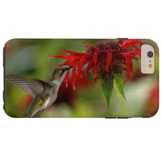 Archilochus Rubi-Throated Colubris do colibri Capas iPhone 6 Plus Tough