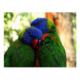Arco-íris Lorikeet no amor Cartão Postal