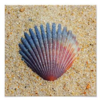 Arco-íris Shell enterrado na areia Impressão De Foto