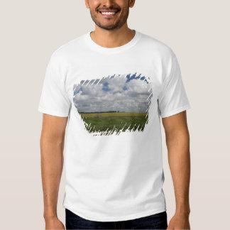 Argentina, Buenos Aires, San Antonio de Areco. T-shirts