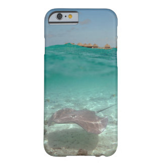 Arraia-lixa subaquática em umas capas de iphone de