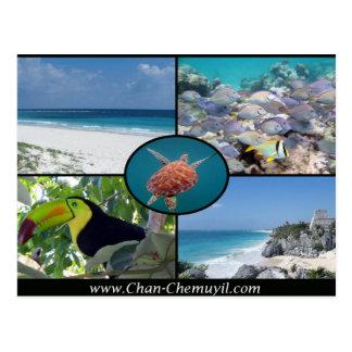 Arrendamentos das férias de Tulum - cartão de Chan Cartão Postal