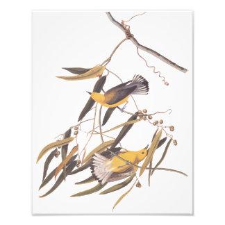 Arte amarela do vintage da toutinegra do impressão de foto