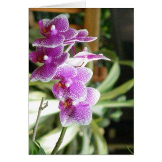 arte da flor do cartão da orquídea
