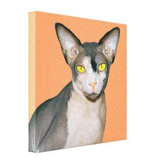 Arte da foto do gato das canvas 8x8 Sphynx abricó Impressão Em Tela Canvas