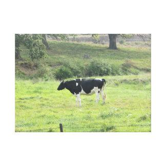 Arte das canvas da parede da foto da vaca de