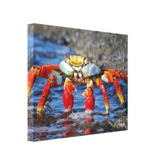 Arte das canvas do caranguejo de Sally Lightfoot