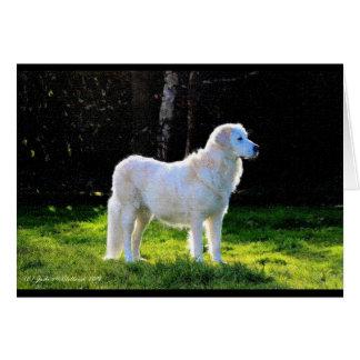 Arte do sheepdog de Maremma, cartão vazio