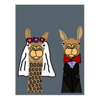Arte engraçada do casamento dos noivos do lama cartão postal