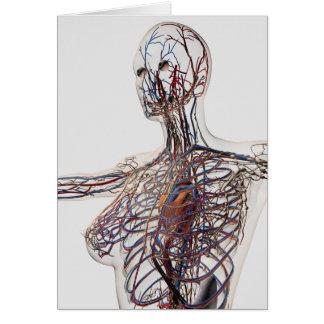 Artérias, veias, e sistema linfático 1 cartoes