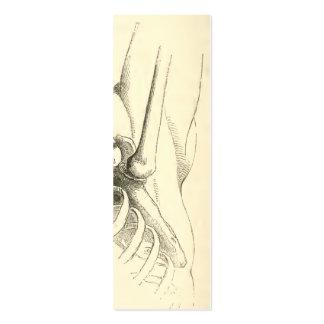 Articulação do úmero da anatomia | do vintage cartão de visita skinny