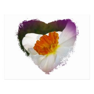 Artigos coordenados florais do narciso branco cartão postal