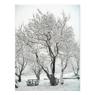 árvore arte de fotos