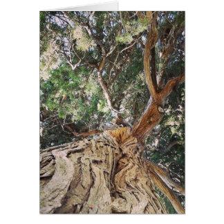 Árvore, aniversário alemão cartão de nota