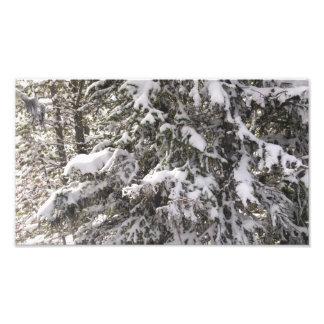 Árvore coberto de neve impressão de foto