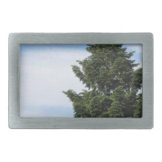 Árvore de abeto verde contra um céu claro