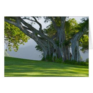 Árvore de Banyan, vale de Manoa, Honolulu, Hawai'i Cartão Comemorativo