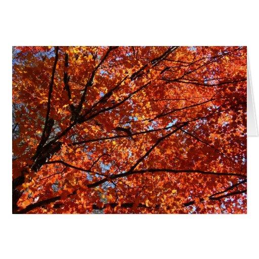 Árvore de bordo cartões