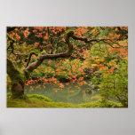 Árvore de bordo no cargo japonês do jardim de Port Poster