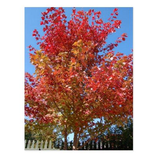 Árvore de bordo no outono cartões postais