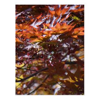 Árvore de bordo vermelho do fogo cartão postal