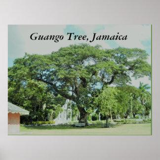 Árvore de Guango, Jamaica Pôster