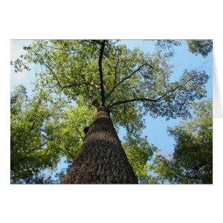Árvore de Kentucky Cartão Comemorativo