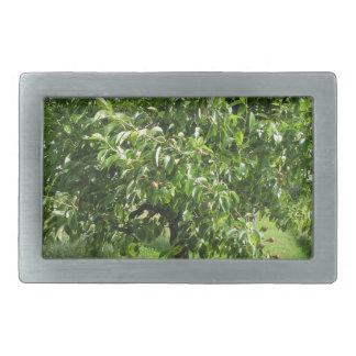 Árvore de pera com folhas do verde e frutas