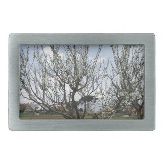 Árvore de pera de florescência no jardim Toscânia,