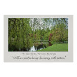 Árvore de salgueiro bonita do primavera e lagoa posters